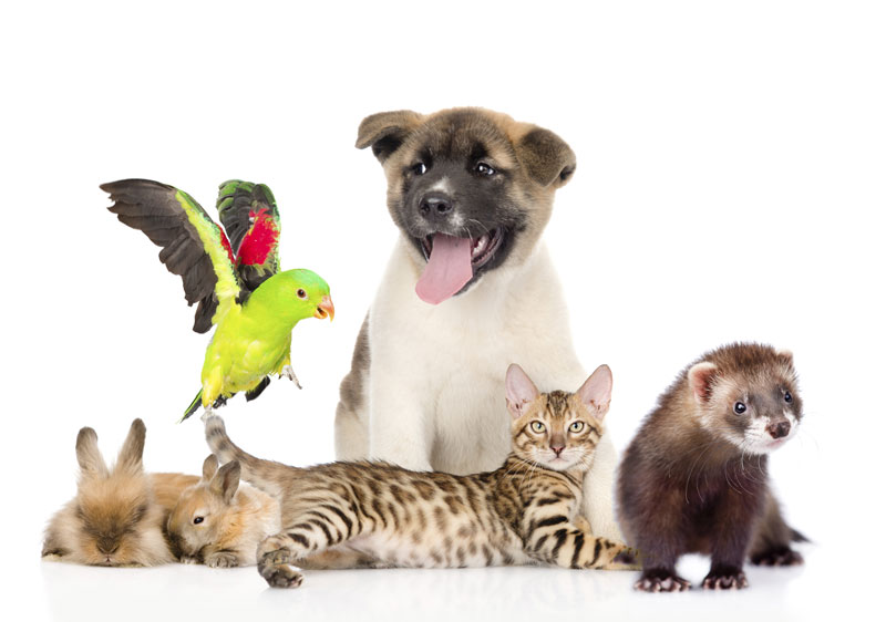 pet-rewards-group