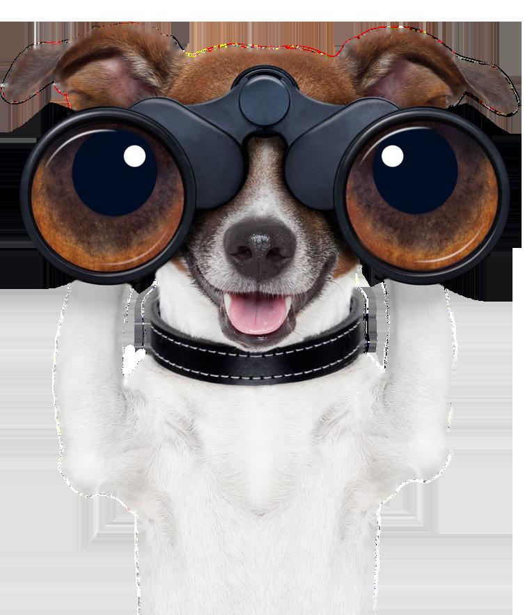 pet-search